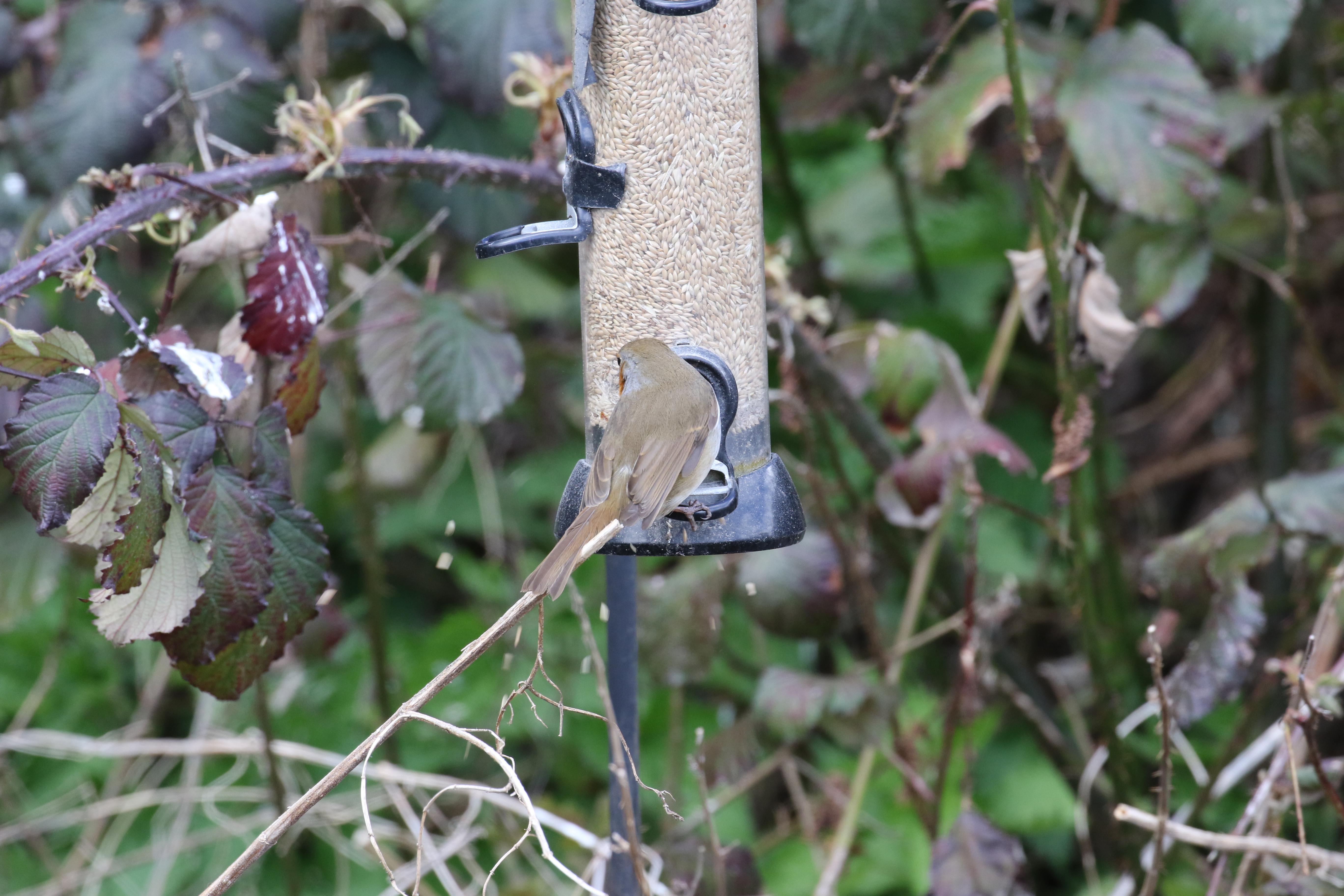 bbq the insect seed sunflower gardener centre eco insects keen chapelwood online feeders bird habitats feeder garden