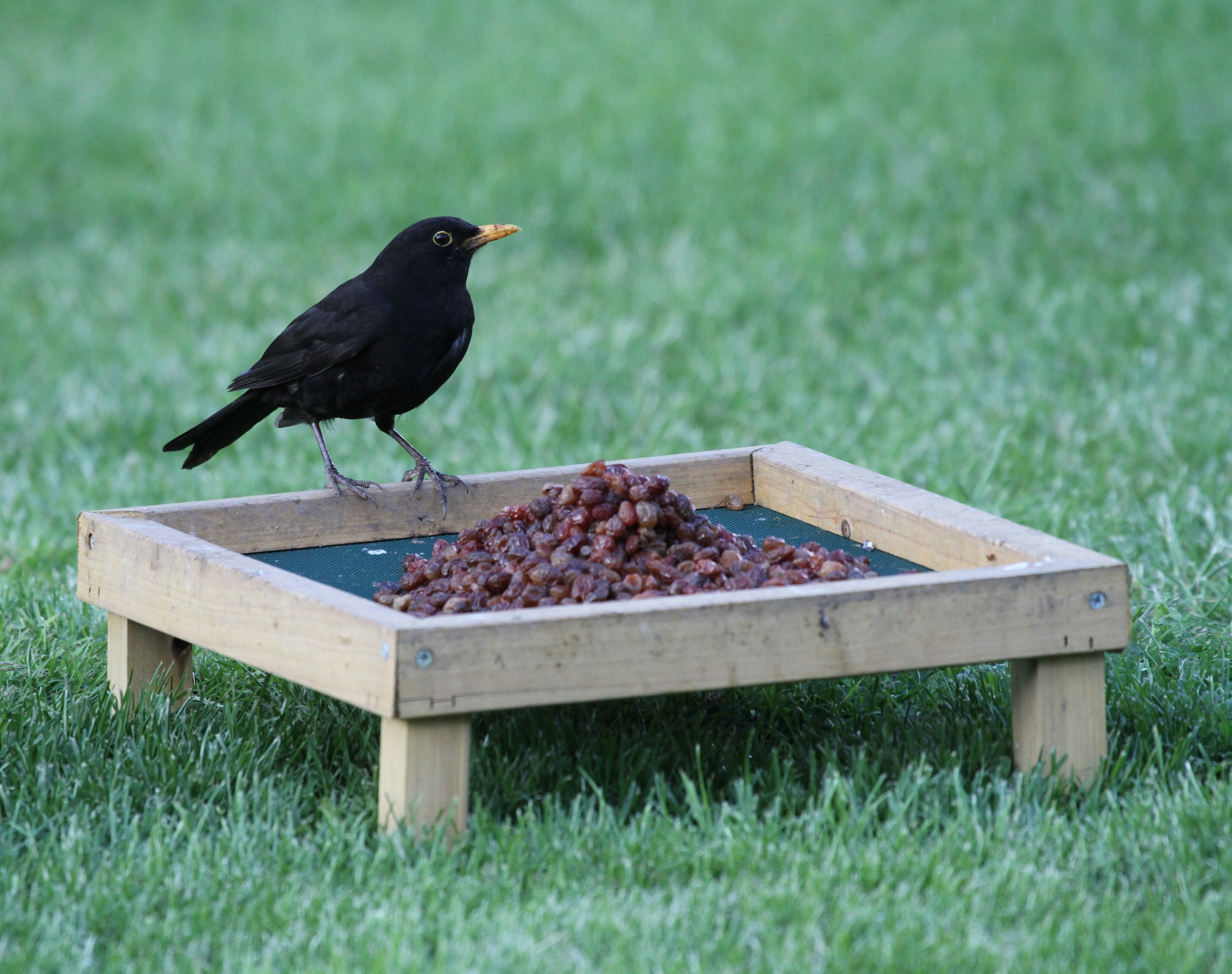 ground lovers would bird just thought pinterest this pin i built my feeder husband with share