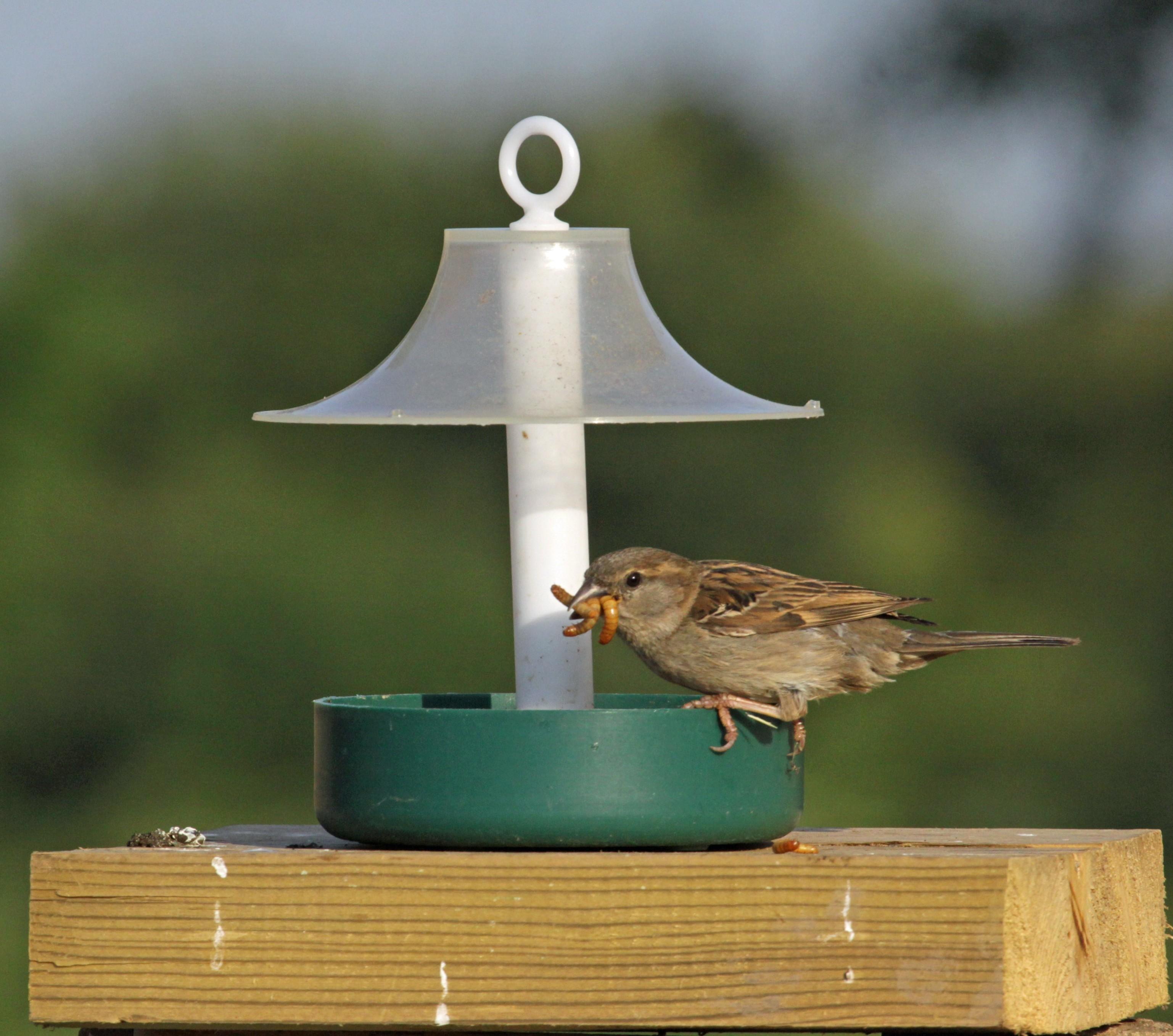 feeder bird food wild british goldfinch niger seed taster feeders uk suppliers finder