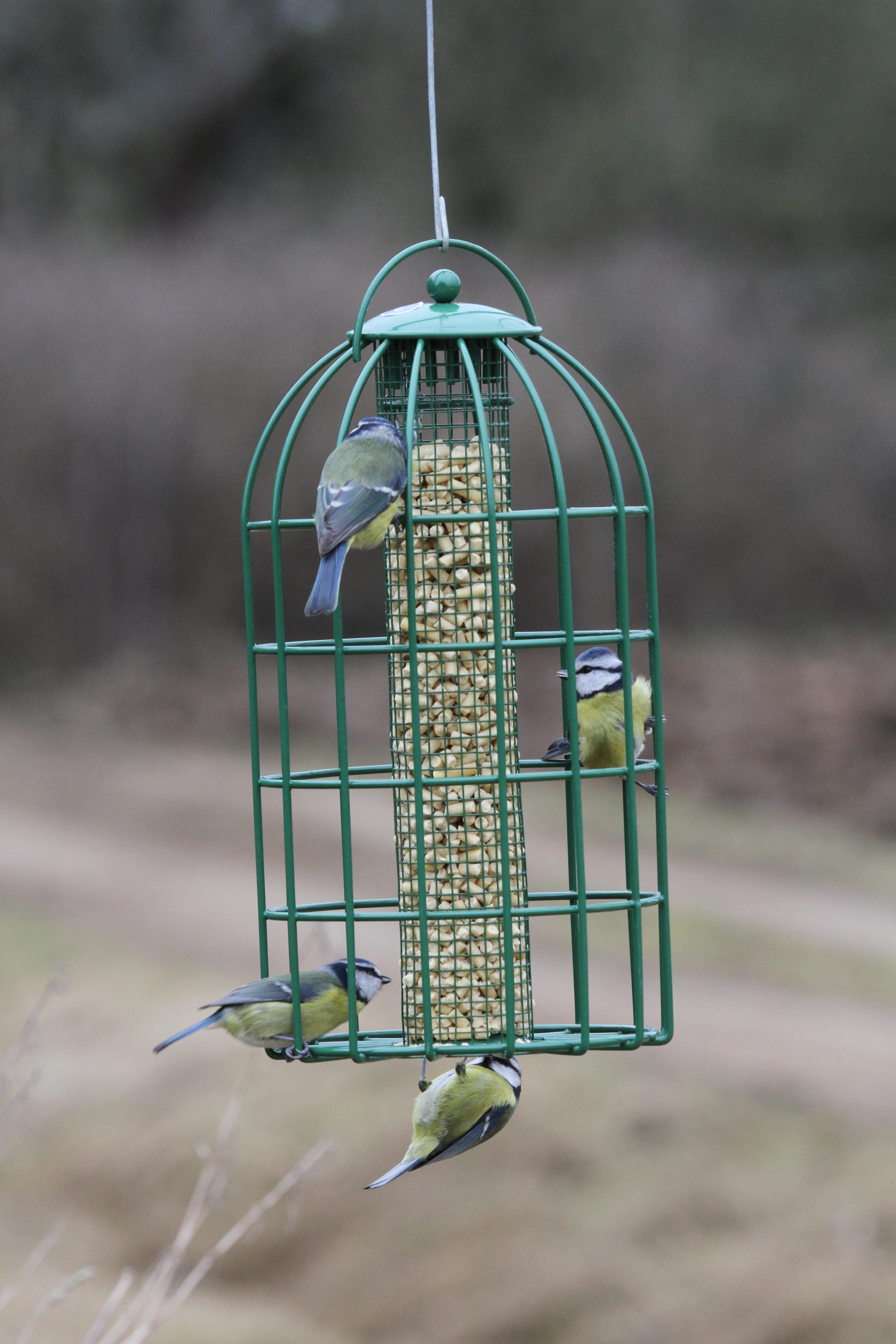 Nuttery Caged Peanut Feeder for Birds