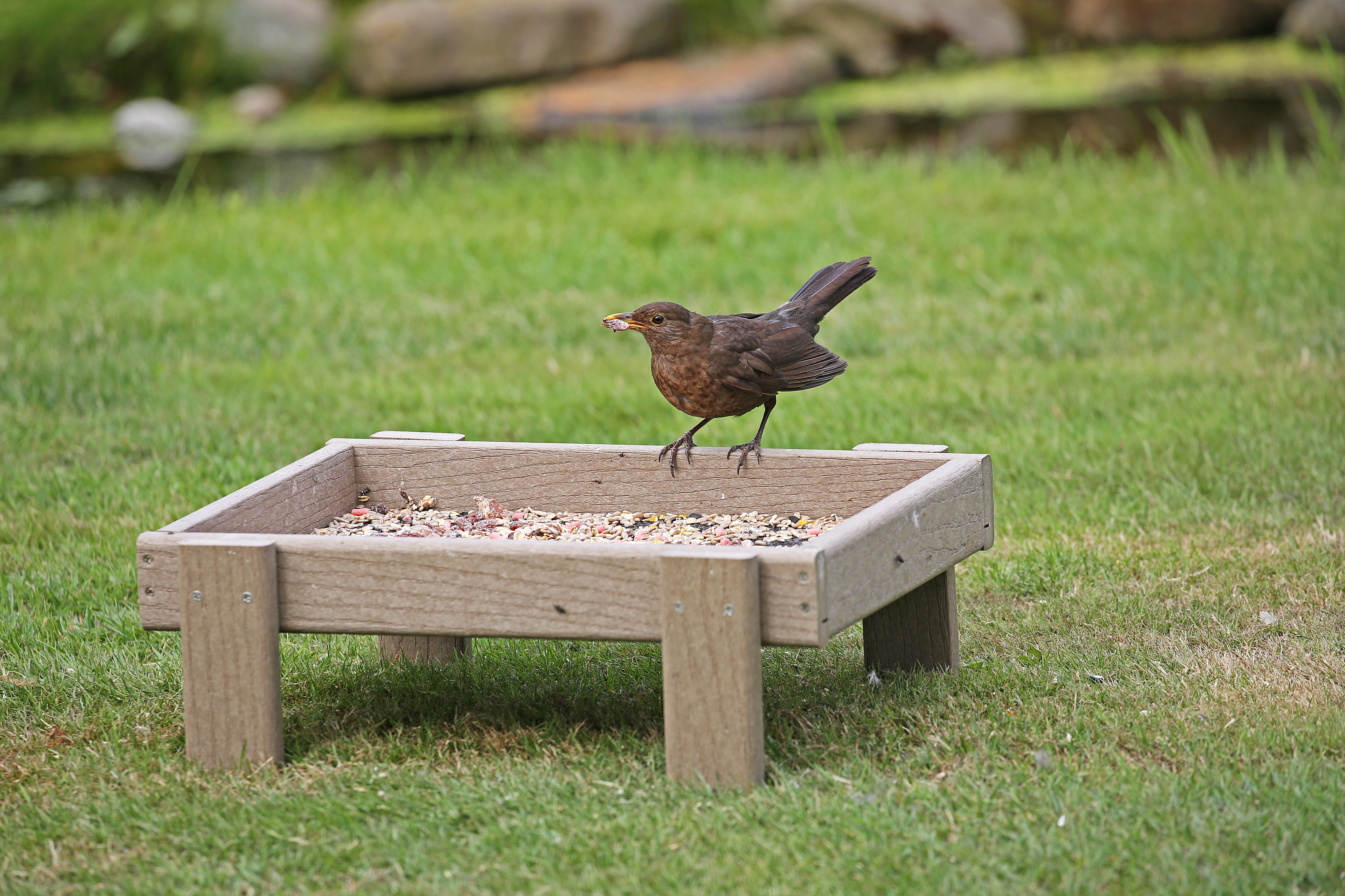 caged bird globe seed nuttery plastic ground tray with feeder
