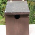 Starling Nest Box
