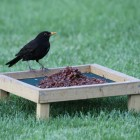Sultanas for Birds