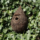 Giant Roost Nest Pocket (