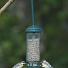 Squirrel Buster Mini Seed Bird Feeder