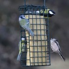 Suet Block Insect