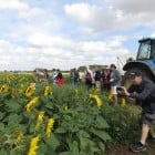 Sunflower Farm Walks