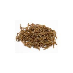 Mini Mealworms