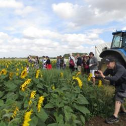 Sunflower Farm Walks