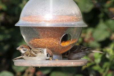 Plastic Seed Globe Feeder With Tray