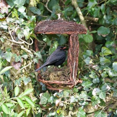 Simon King Open Nest Buddy