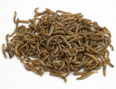 Live Mealworms-250g