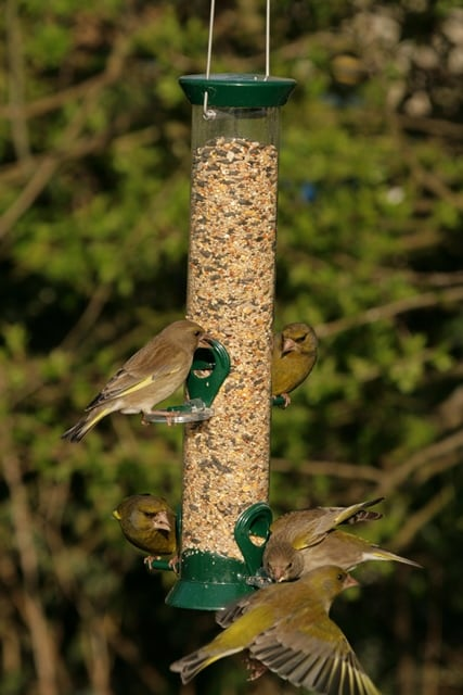 Hanging seed feeder
