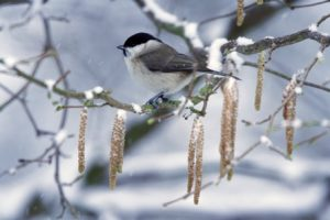 Is your garden wildlife-ready for winter?