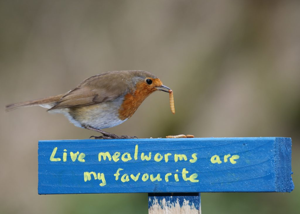 Live mealworms are the best