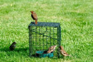 Caged bird feeder for live mealworms