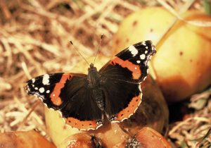 Golden leaves and boozing butterflies by Andrew Cooper