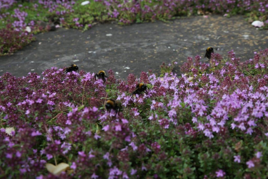 Buzzing bees