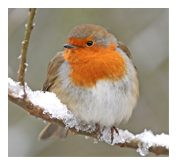 Now is the time to increase the food supply for the birds in your garden