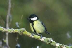 Scientific Study Shows Benefit of Feeding Garden Birds