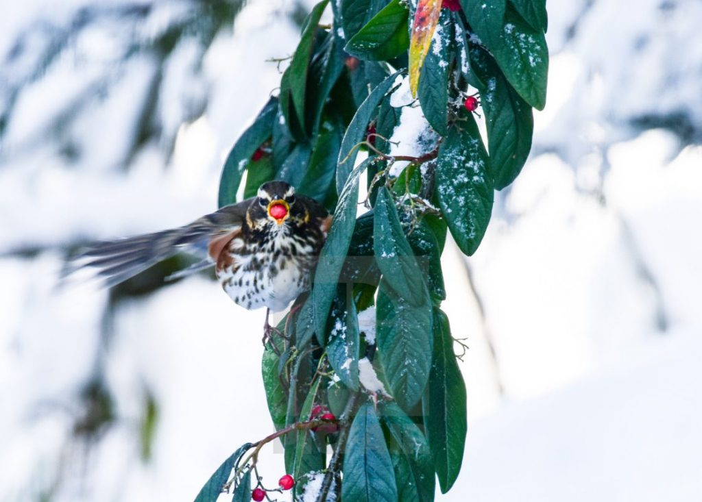 Feed Birds in Winter - They need it!