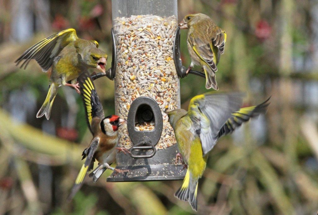 How To Keep Your Garden Birds Healthy