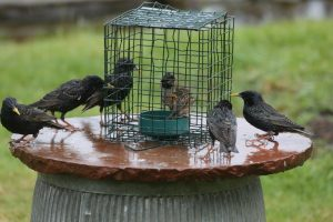 Early Spring feeding for the birds in our gardens