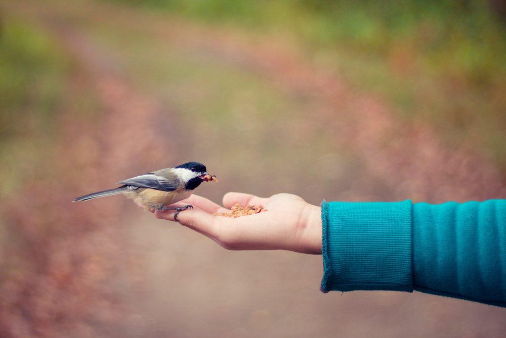 Prescribing birds