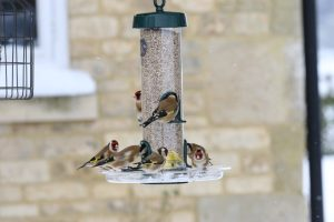 BTO confirms what we already believed: feeding the birds in your garden increases their numbers