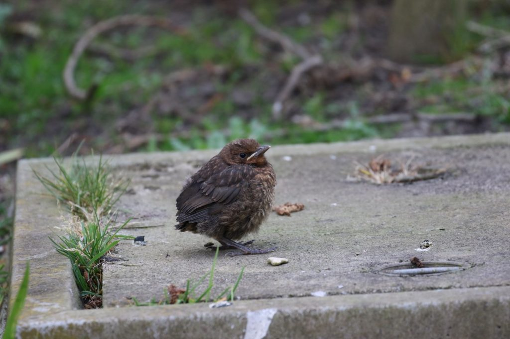 Could the new decade start well for some of our garden birds?