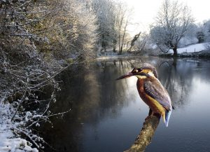 A Kingfisher could make your day