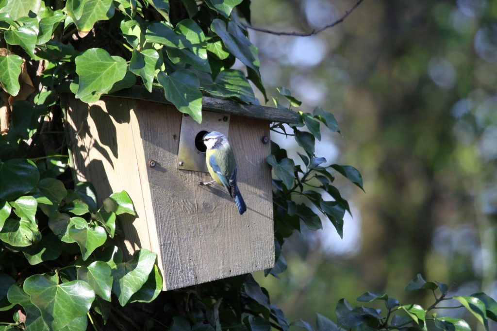 What is National Nest Box Week and how can you get involved?